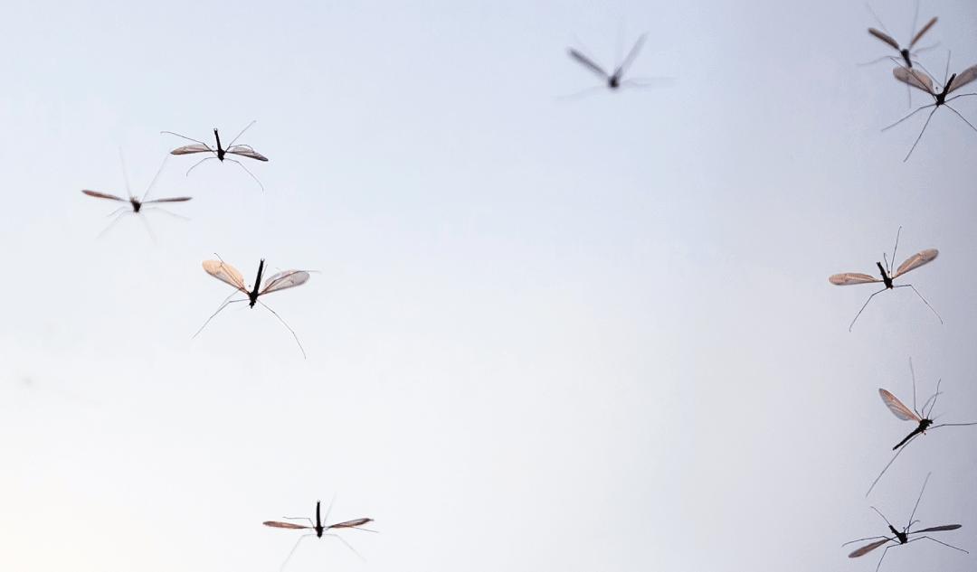 Dicas de prevenção contra picadas de mosquito